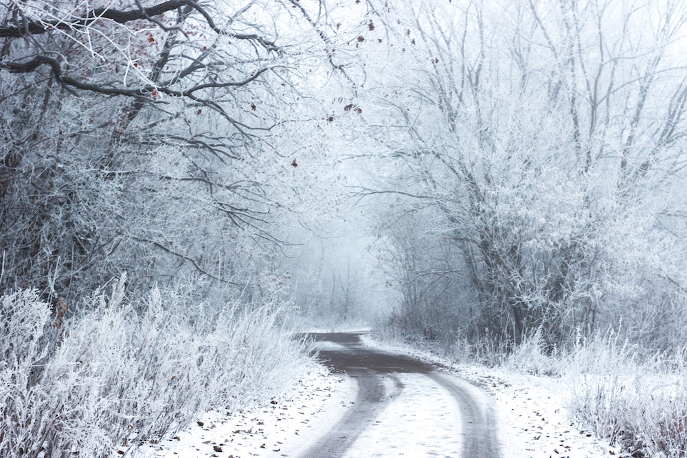 Snowy road surrounded by trees